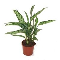 Plants: indoor